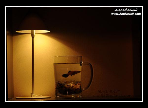 صور مساء ولا احلى مساء