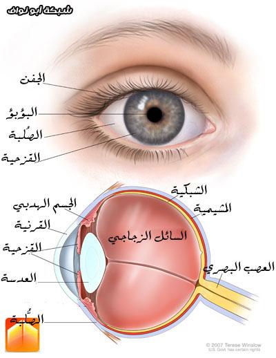 كيف رسم العين