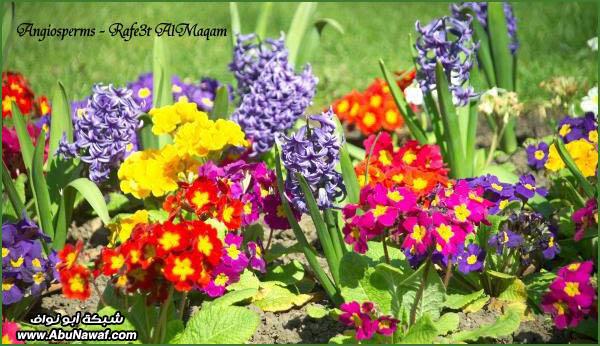 معلومات عن مملكة النباتات YaffIDqCDcJApabg