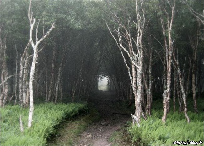 غابات كرتون