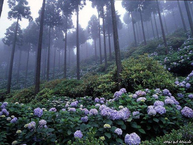 ابداع الخالق beautiful_places_to_