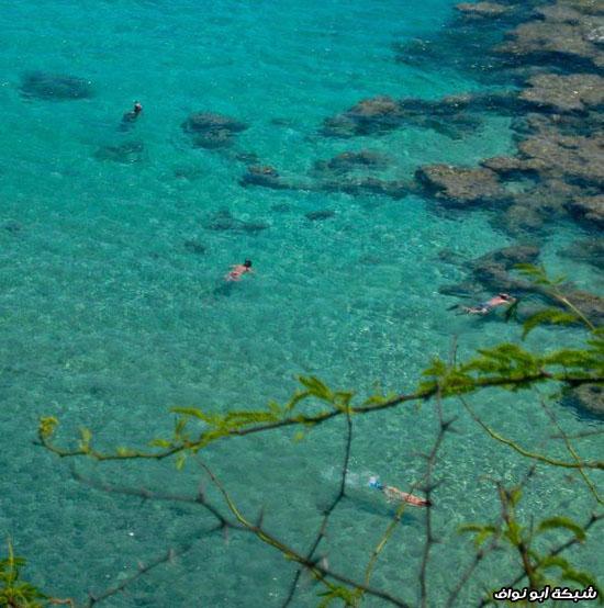 من كل بستان زهرة ( صور سياحية) Amazing_beaches_with_incredibly_clear_water_640_22
