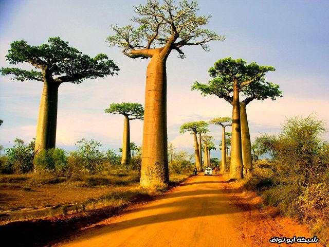 موروندافا في مدغشقر