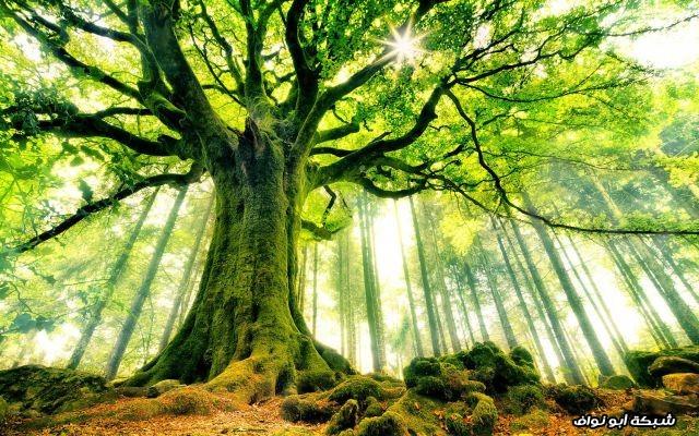 احدى الغابات في فرنسا