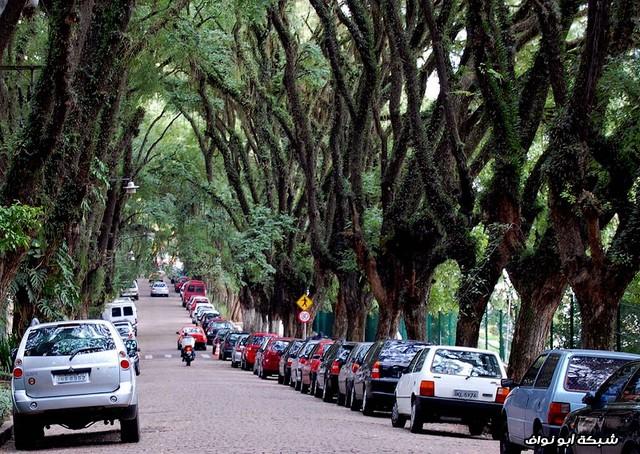 أجمل الشوارع