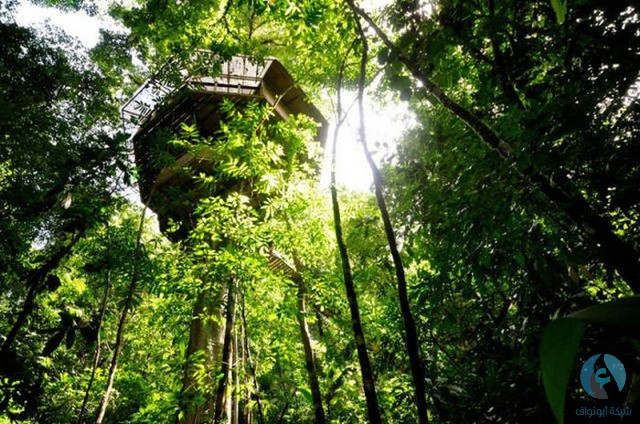 بيت الشجرة