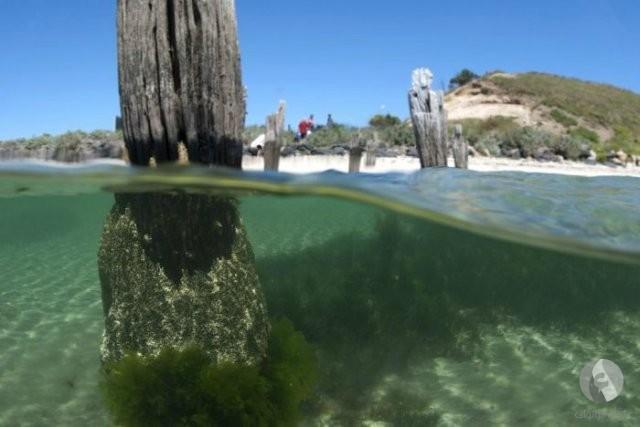 نصف الصورة تحت البحر