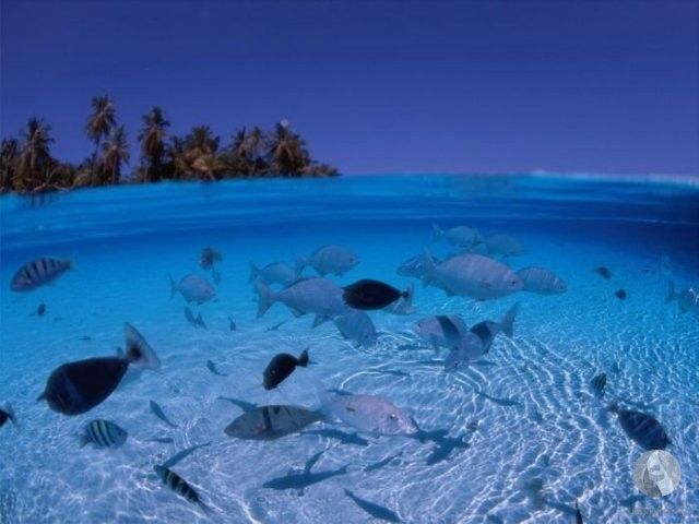 أسماك في البحر