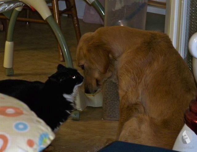 كلب وقط